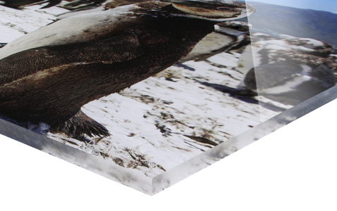 Foto za akrylovým sklem