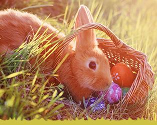 Themenwelt Ostern