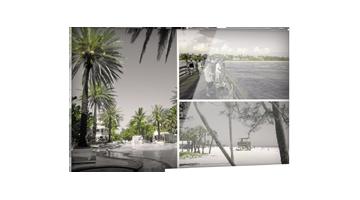 Collage Spiaggia e palme