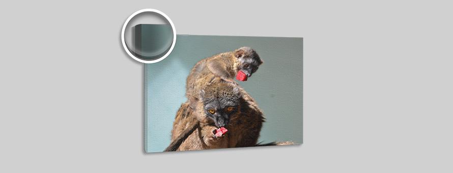 Adriane Wedler 2 Affen
