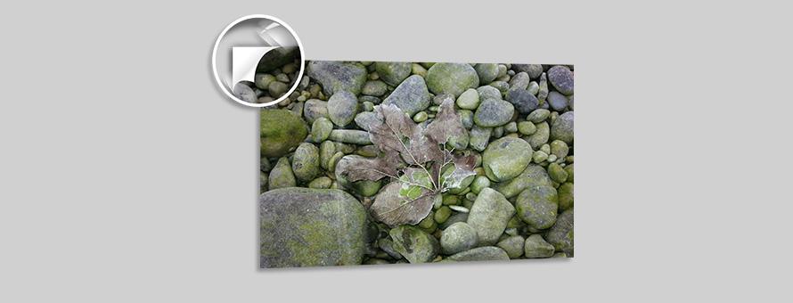 Angelika Weidenauer Blatt auf Steinen