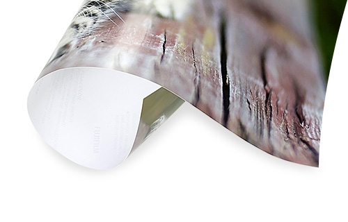 Premium-Fotopapier Matt von FujiFilm