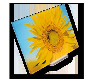 Foto auf Acrylglas