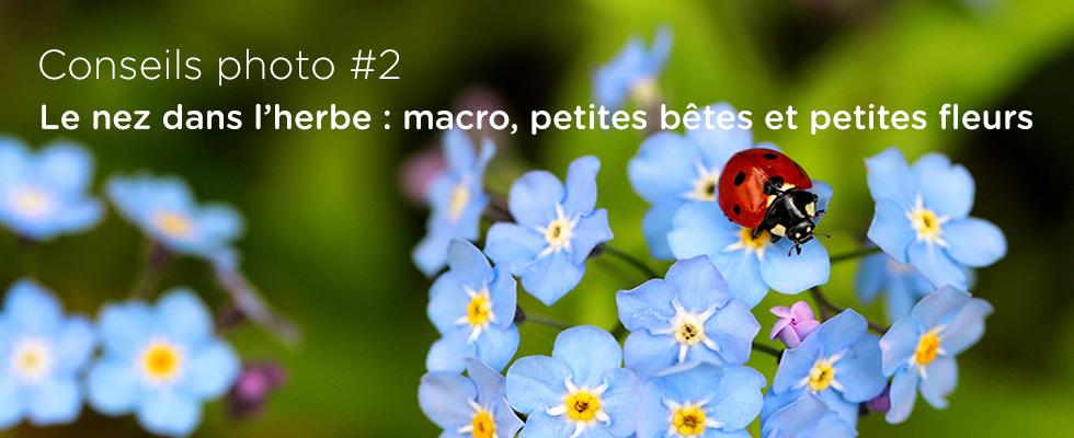 Conseils photo #2 : Le nez dans l'herbe - macro, petites bêtes et petites fleurs