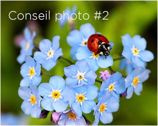 Le nez dans l'herbe : macro, petites bêtes et petites fleurs