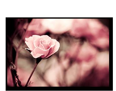 cveće