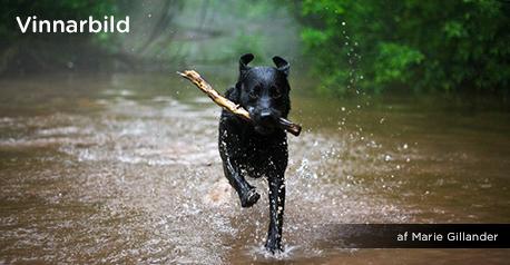 Fototävlingen: Mitt husdjur - Vinnar