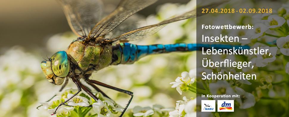 Insekten – Lebenskünstler, Überflieger, Schönheiten